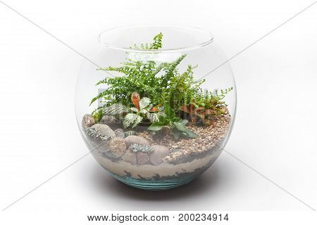 Fern terrarium in a round glass vase isolated on white background