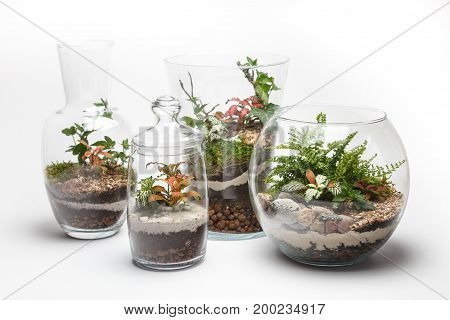 Mini gardens (terrariums) in different glass vases isolated on white background