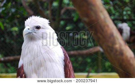 An Eagle With White Head in A Zoo