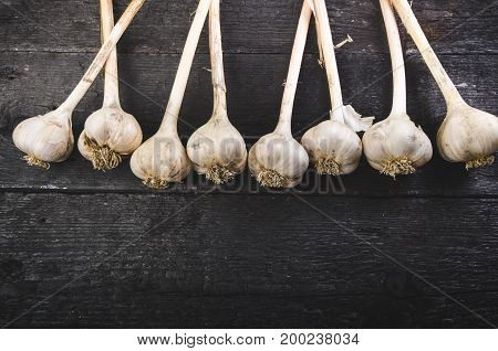 Cloves of garlic on a wooden black table. Fresh garlic bulb with iron garlic press. Vintage background. Farmer. Medicine and healthy. Traditional medicine.