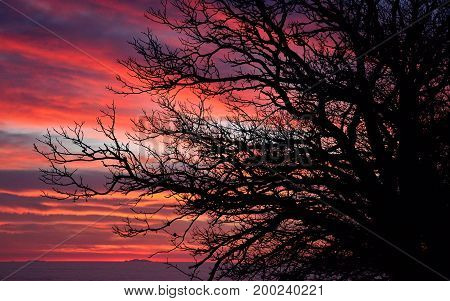 Tree backlit at dawn with cloudy sky of intense color in background