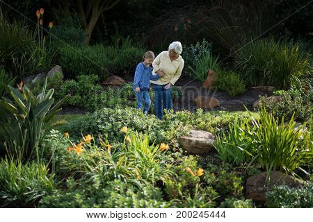 Grandmother and granddaughter looking at the plants in garden on a sunny day