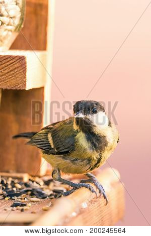 Single Male Blue Tit Perched On Bird Feeder With Several Kinds Of Seeds