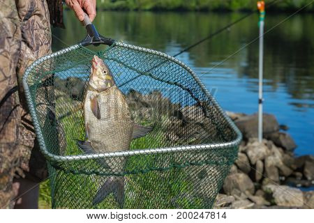 Caught fish on fishing line in hand fisherman over at landing net against natural background with outdoor water. Concepts fortune, success, active rest, hobbies