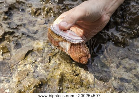 Bivalves in hand closeup on the background of the sea