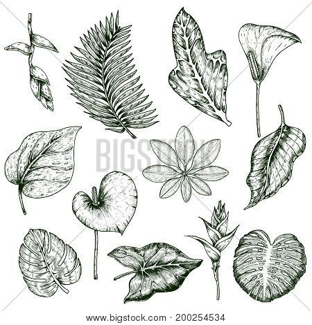 Hand drawn tropical plants monochrome set with leaves of plumeria palm hibiscus and monstera isolated vector illustration