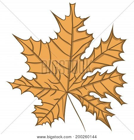 Maple Leaf. vector illustration. Drawing by hand