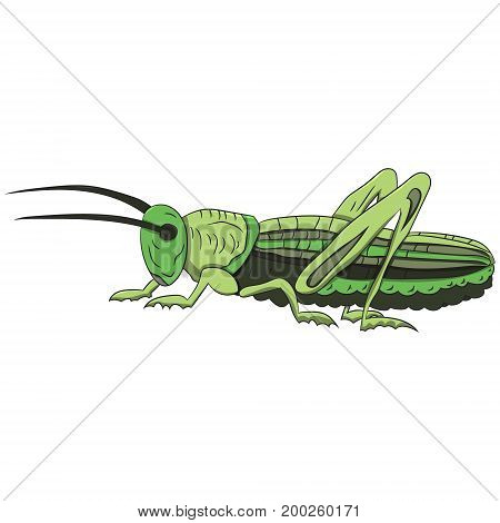 Green grasshopper on a white background. vector illustration. Hand drawing