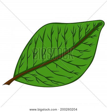 green leaf. vector illustration. Drawing by hand