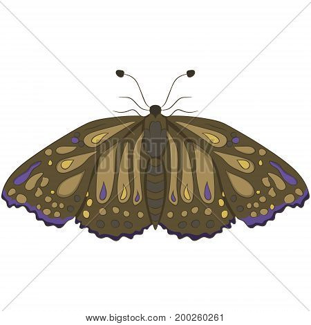 Brown moth. vector illustration. Drawing by hand
