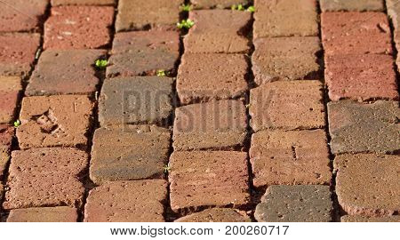 Nineteenth century street brick surface as a background