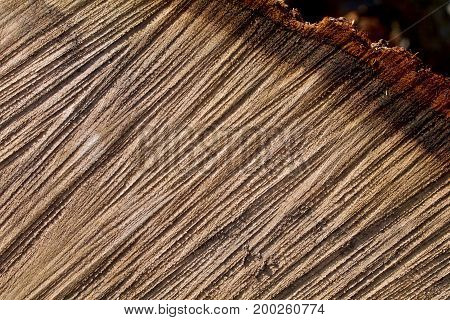 Grooves in an oak section with shadows