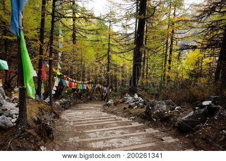 Shangri la stairs going through forest filled with yellow green red autumn trees and small flags in valley in Yading national level reserve Daocheng Sichuan Province China.