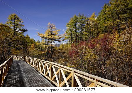 Shangri La, With Yellow Green Autumn Trees In Valley And Wooden Footpath Bridge Underneath Blue Skie