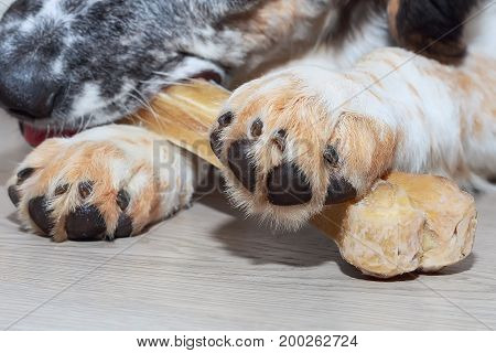 dog paw and bone macro close up