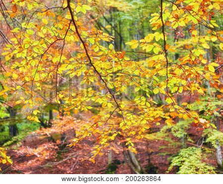 Background Texture Of Yellow Leaves