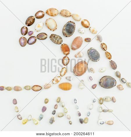 Wave Pattern of sea shells isolated on white background. Flat lay. Top view