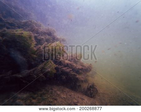 River algae in troubled waters, underwater frame photo
