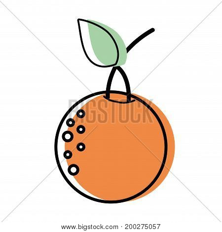 delicious orange fruit with protein nutrition vector illustration