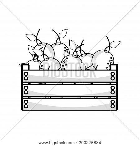 line delicious oranges fruits inside basket vector illustration