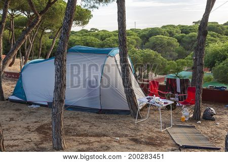 Blue tent on a campground under the pine trees