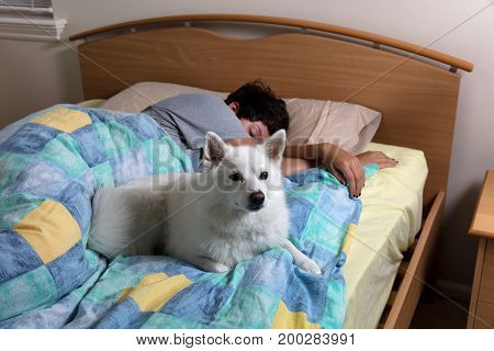 Family dog on guard while girl in bed sleeping
