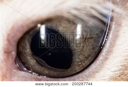 The eye of a small kitten as a background. macro
