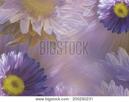 Floral violet-white beautiful background of daisy. Wallpapers of flowers purple-yellow Chamomile. Flower composition. Nature.