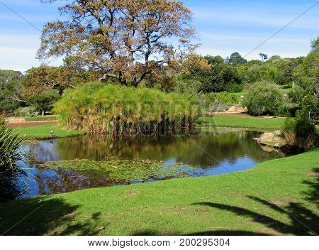 FROM KIRSTENBOSCH NATIONAL BOTANICAL GARDEN, CAPE TOWN, SOUTH AFRICA, A POND, SURROUNDED BY TREES AND OTHER VEGETATION