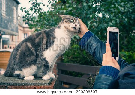 Girl stroking cat on the street and photographs on the smartphone, the atmosphere of city life
