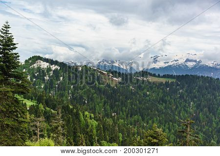 Young Greens Of Deciduous Trees And The Dark Needles Of Fir Trees On The Slopes Of The Caucasus Moun