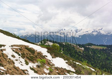 Young Greens Of Trees And Remnants Of Snow On The Slopes Of The Caucasus Mountains