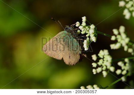 Dark beautiful butterfly on a white flower in the sunlight light
