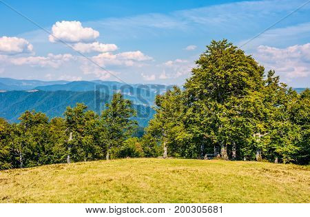 Ancient Beech Forest On Grassy Meadow In Mountains