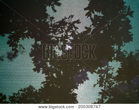 Shadow of tree and leaves on a bright sunny day gardening background image
