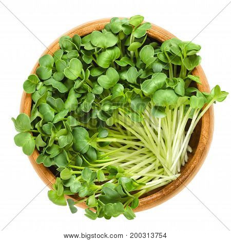 Daikon radish seedlings in wooden bowl. Sprouts of winter radish, also called Japanese or oriental radish and true daikon. Raphanus sativus. Isolated macro food photo close up from above over white.