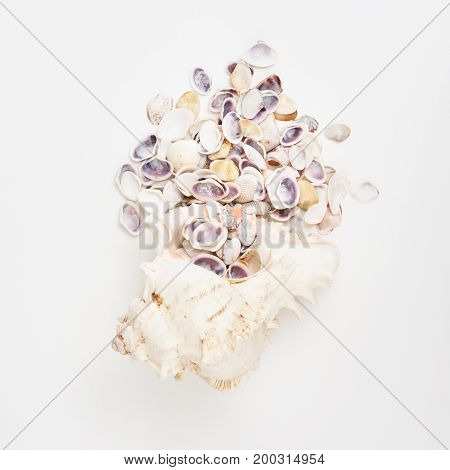 Flat Lay Of Shells On A Blue Wooden Background