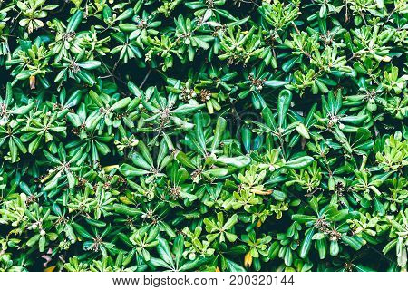 Green leaves background. Close up foliage texture