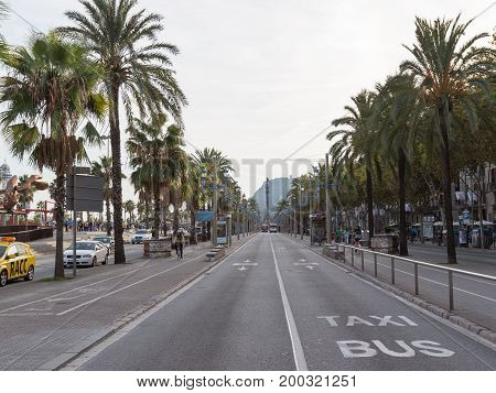 Barcelona - October 10 2015: Palm trees on Columbus's main road and the Columbus monument in the distance October 10 2015 Barcelona Spain