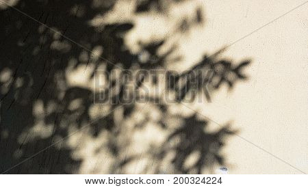 Shadow of leaves and tree on faded painted wall. Dirty