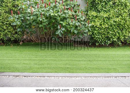 athway in garden with green treeplantgrass.home.copy space
