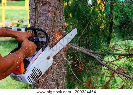 Workers With Chainsaw In The Forest