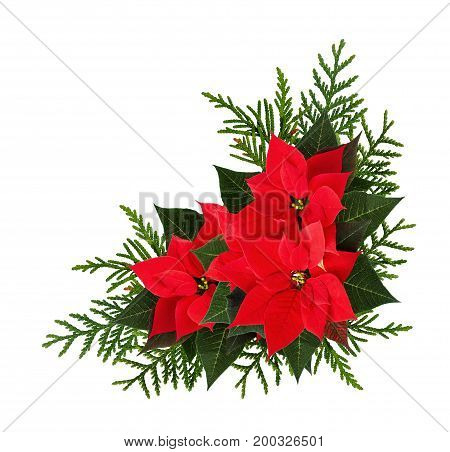 Christmas red poinsettia flowers corner arrangement isolated on white background