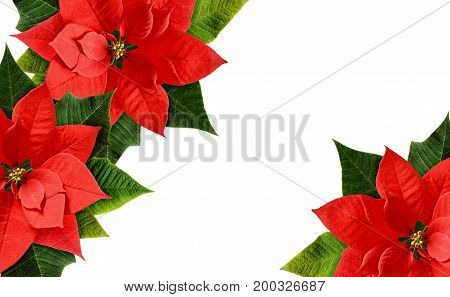 Christmas poinsettia flowers corners isolated on white background. Flat lay. Top view.