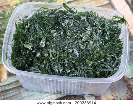 Dill freezing in plastic container for winter