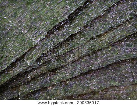 Nori seaweed few green dried sheets background