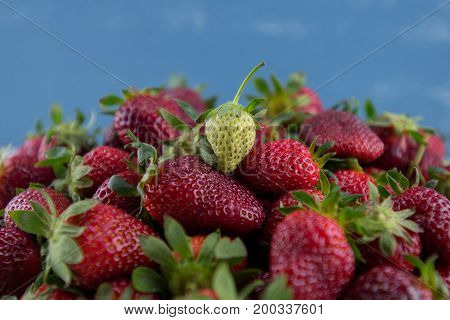 Green Strawberry Sits on Pile of Ripe Berries in front of blue background