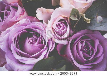 Fresh pink roses macro shot, elegant summer flowers, vintage style