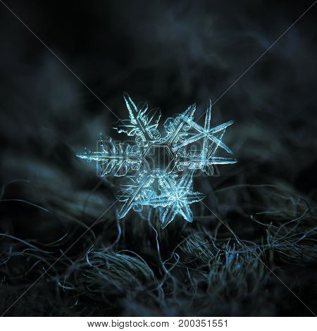 Cluster with three snowflakes, glowing on dark blue textured background. Macro photo of real snow crystal: stellar dendrites with thin, sharp arms, elegant shapes and transparent surface.