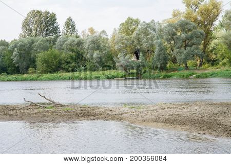 White stork (Ciconia ciconia) flying over the river Bug, Poland